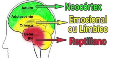 Cérebro da criança